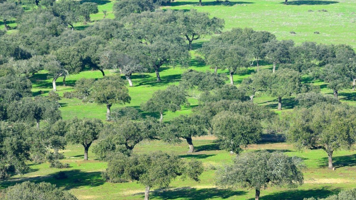 diario badajoz - cierre Perimetral Badajoz